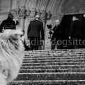 DOG CANE AL MATRIMONIO