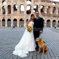 PIT BULL AL MATRIMONIO CON COLLARE FIORI ROMA COLOSSEO FOTO