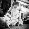 WEDDING DOG SITTER NAPOLI