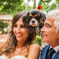 SPOSI CON IL CANE WEDDING DOGSITTING