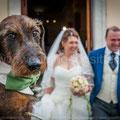 WEDDING DOG TOSCANA VIAREGGIO ANTICA FATTORIA DI PATERNO