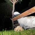 MATRIMONIO WEDDING DOG SITTER APPIA antica CASALI TEA