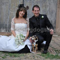 MATRIMONIO WEDDING DOG SITTER  BOLOGNA