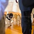 MATRIMONIO CON CARLINO WEDDING DOG SITTER PESCARA CASTELLO DI SEPTE