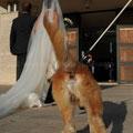 MATRIMONIO WEDDING DOGSITTER ROMA CASALI TEA