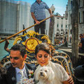 WEDDING DOG SITTER VENEZIA