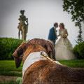 WEDDING DOGS TOSCANA VIAREGGIO DOG SITTER ANTICA FATTORIA DI PATERNO