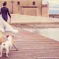 LABRADOR RETRIEVER AT WEDDING IN VENICE
