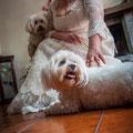 SPOSA CON MALTESE CANE AL WEDDING NAPOLI DOG SITTER VILLA CLERMONT
