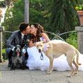 MATRIMONIO CON CANI WEDDING DOG SITTER ROMA Villa Fiorita