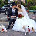 MATRIMONIO WEDDING DOG SITTER TIVOLI