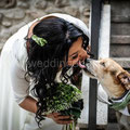 SPOSA CON IL CANE AL MATRIMONIO WEDDING DOG TOR DE SORDI