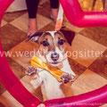 WEDDING DOG SITTER VENETO VENEZIA PADOVA TREVISO