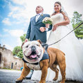 CANE AL MATRIMONIO A ROMA WEDDING DOG SITTER