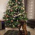 Lillys erstes Weihnachten 2016