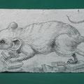 "[697] ERICAILCANE ""Ratto delle macerie"""