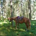 Tréphy, rando, cheval, Clédat