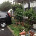 建築後20年が過ぎた緑地帯。木が車にぶつかりそうです。