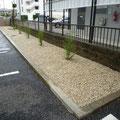 バック駐車の目印になるようライン線に沿って低木を植えました。