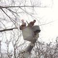 спил деревьев в Таганроге