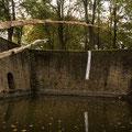 """""""Liquid Fishing Rod"""", poplar, screws, 7m long, Ypres (B), 2018"""