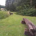 Gelände beim Hundewasser Zwinger vom Hegstrauch