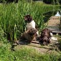 Erholung nach dem Schwimmen im Hundewasser Zwinger vom Hegstrauch