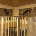 Hundezimmer Kleiner Münsterländer Zwinger vom Hegstrauch