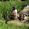 Das Rudel am Hundewasser