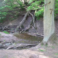 Bach & Wald