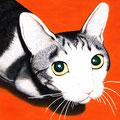 B5「猫」