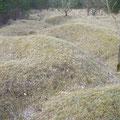 Die Kraterlandschaft des zentralen Schlachtfelds