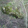 Einstieg in einen unterirdischen Unterstand mitten im Wald