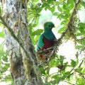 Resplendent Quetzal, Costa Rica, Februar 2011, (c) Doro Koch