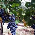 Italy - Rom - winery