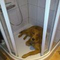 Dexter in der Dusche