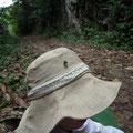 雅恵の帽子の汗にご執心のアマミウラナミシジミの一種。