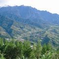 キナバルの山裾の高原は徹底的に開墾されている。