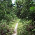 ジャングルに続く小径。この先でバンカナオオイナズマが採れた。