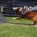 Joli  geb.  19.03.2006   Flyball