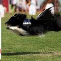 Fridolin     geb. 23.05.2008  Flyball u. Agility A1
