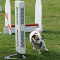 Spike    geb. 08.01.2005  Flyball/Senior