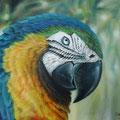 """""""Parrot"""" (100 x 90)"""