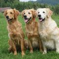 Drixy, Britta, Coco