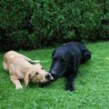 Leesha und Cosmo am 25.08.17