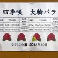 大輪のバラ 品種紹介 平塚市 なでしこ公園 2018年10月28日