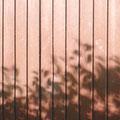日食寸前のシルエット。まだ葉の形が見えます。