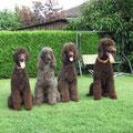22.06.2013 Dulce,Oma Bev, Mama Baya, Bruder Dino