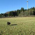 Herbst in Zainingen
