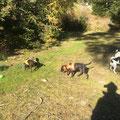 Terrier-Treffen